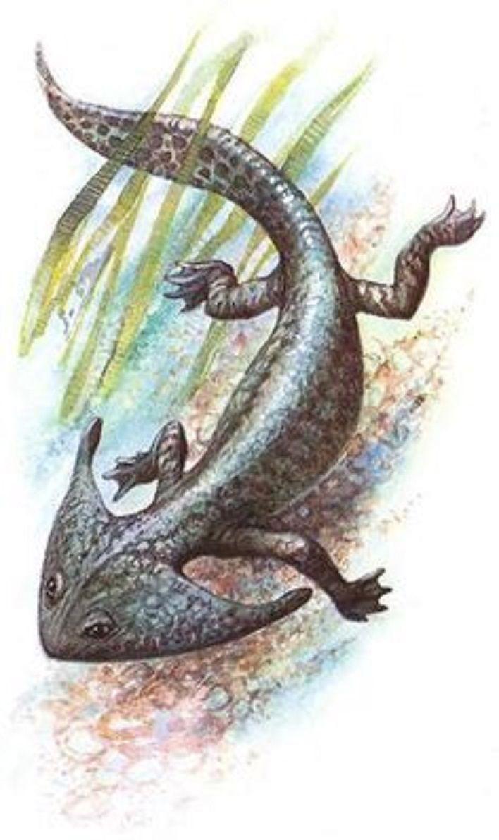 "Art illustration - amphibian - Diplocaulus: ( ""double ..."