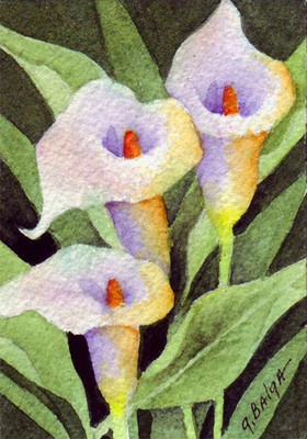 ACEO original watercolor CALLA LILIES by Gail Balga
