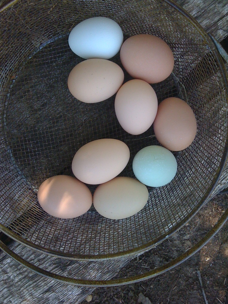 colorful eggs.