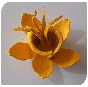 daffodil egg carton