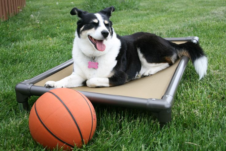 This is not an advertisement for Kuranda, but it is an advertisement...... TO VOTE FOR ROXIE! The photo with the highest votes will win 5 dog beds for a dog shelter of their choice. I chose the Wil...