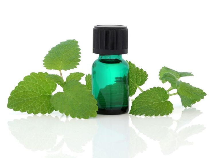 The health benefits of Melissa Essential Oil can be attributed to its properties as an antidepressant, cordial, nervine, emmenagogue, sedative, antispasmodic, stomachic, antibacterial, carminative, diaphoretic, febrifuge, hypotensive, sudorific and tonic substance.
