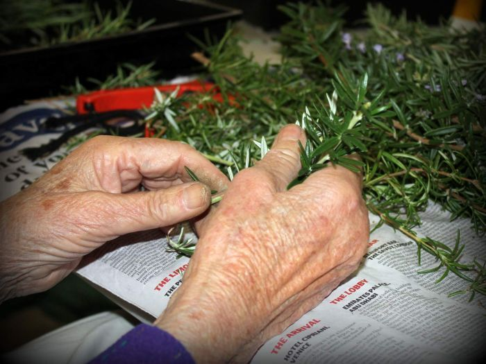 A woman's hands preparing rosemary sprigs for Anzac Day.