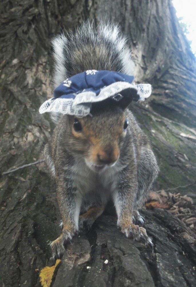 Best Penn State Squirrel Images On Pinterest Squirrels Funny - Student befriends campus squirrels then dresses them in the cutest outfits ever