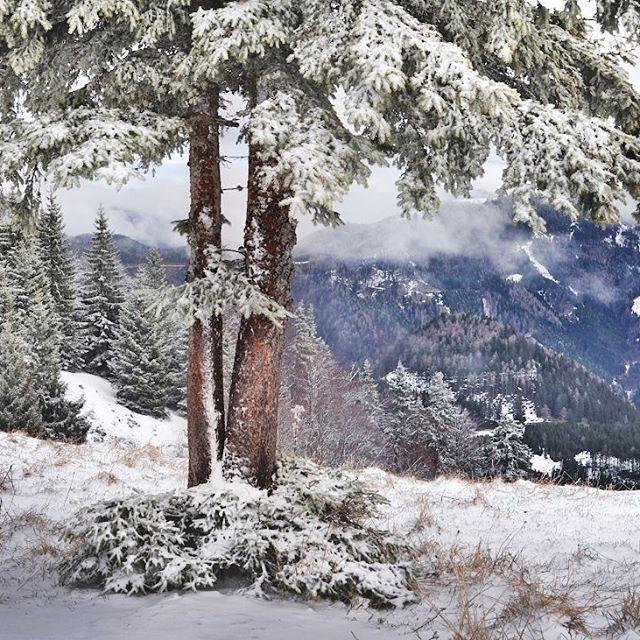 Волшебница зима преображает все вокруг. #фотоизабеллазубкова #лес #австрия #снег #зима #гора #природа #пейзаж #путешествия #landscape #nature #travel #scenery #beautiful #view #scenic #tourism #natural #tree #environment #land #winter #mountain #snow #izabellazip #фотограф