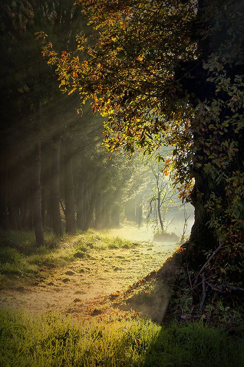 lori-rocks: In a quiet forest (by Jose Luis Casti)...i love to walk with him, here beneath the trees with the dying sunlight filtering through the trees...
