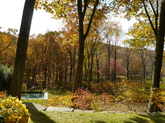 Woodland weekend refuge | New York Social Diary