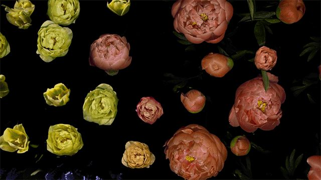 An Elegant Flower Time-Lapse Three Years in the Making