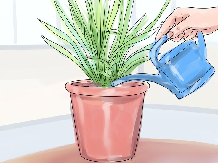 How+to+Grow+Cymbidium+Orchids+--+via+wikiHow.com