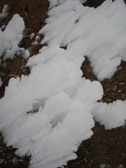 the snow version of diffusion limited aggregation