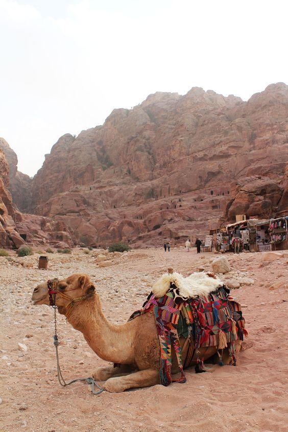 A camel in Petra, Jordan: