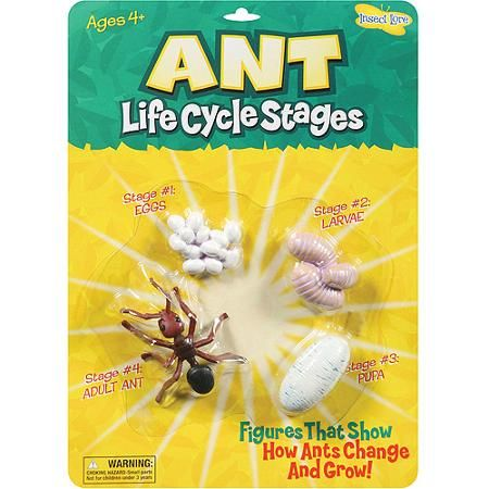 Life Cycle Stages-Ant
