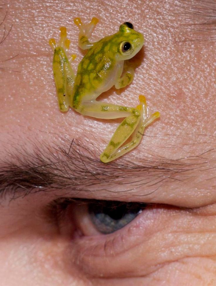 Tree Frog Slide #23