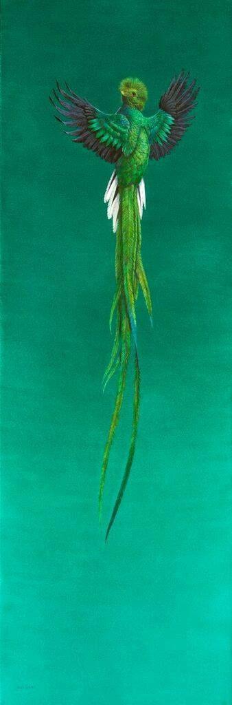 SOAR - GREEN BY TIM HAYWARD