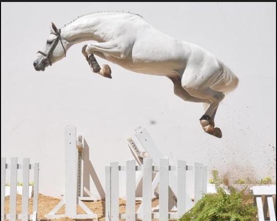 Beautiful high jump! | Horses - Show Jumping | Pinterest