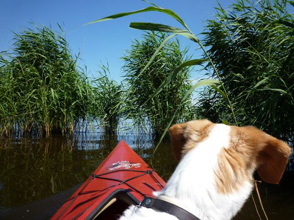 Our former stray dog Jigger in a canoe ... and she loves it!