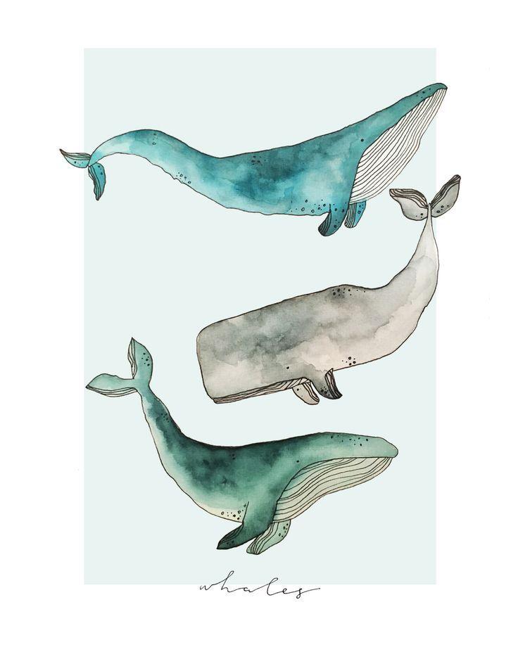 Wale Von Megan Gilbert Aquarellwale Digitalisiert Aquarell Fisch
