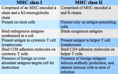 Differences between MHC class I and class II