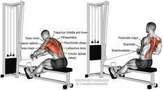 Seated cable row exercise