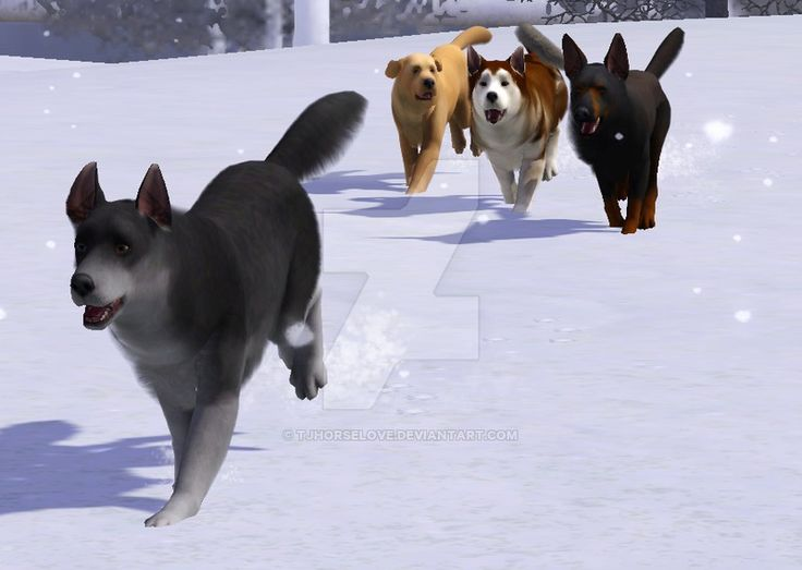 Dog pack |Sims 3 pets by tjhorselove on DeviantArt