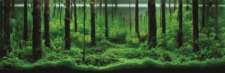 Aquatic Eden: ADA International Aquatic Plants Layout Contest 2010: Top 10 Tanks - Aquascaping Aquarium Blog