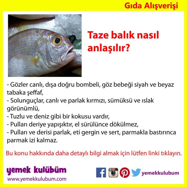GIDA ALIŞVERİŞİ : Taze Balık nasıl anlaşılır?   http://yemekkulubum.com/icerik_sayfa/taze-balik-nasil-anlasilir   #balık #tazebalık #alışveriş #çipura #çupra #lüfer #levrek #istavrit #hamsi #palamut #karadeniz #marmara #ege #akdeniz #taze