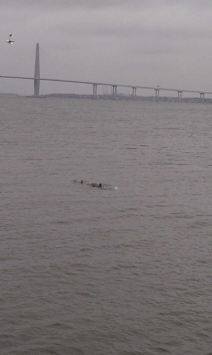 North charleston south carolina city information epodunk - Dolphins In Charleston Sc