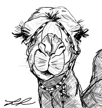 THIS IS ALICE the camel.- flirty eyelashes