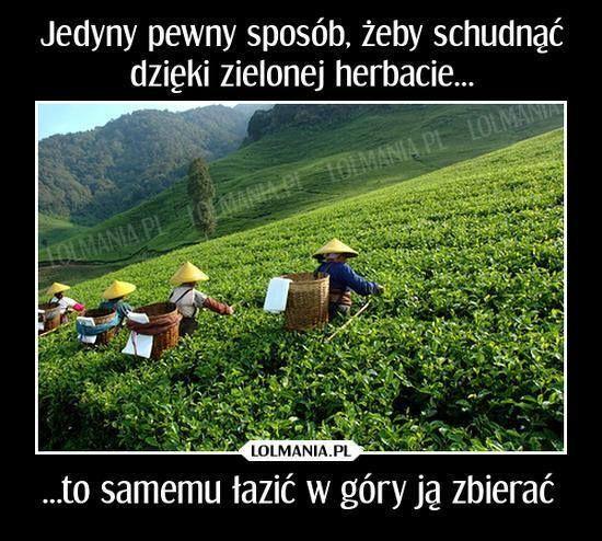 Jak schudnąć dzięki zielonej herbacie