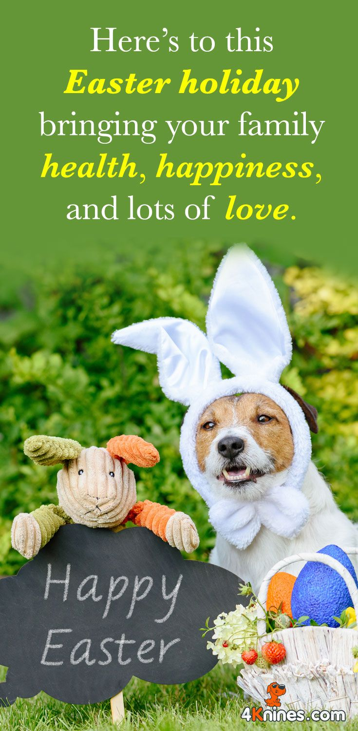 Happy Easter From All Of Us At 4knines Dog Quotes Jack Russell Cute Animals
