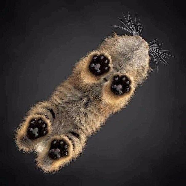 Необычный ракурс кота