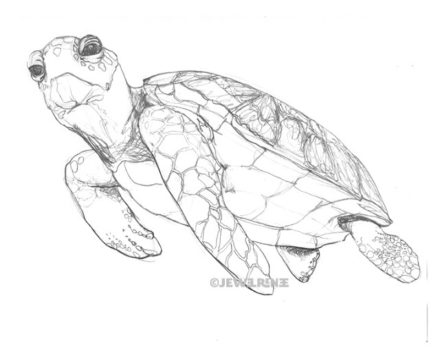 Sea Turtle Drawings Turtles Drawing Art Drawing Ideas