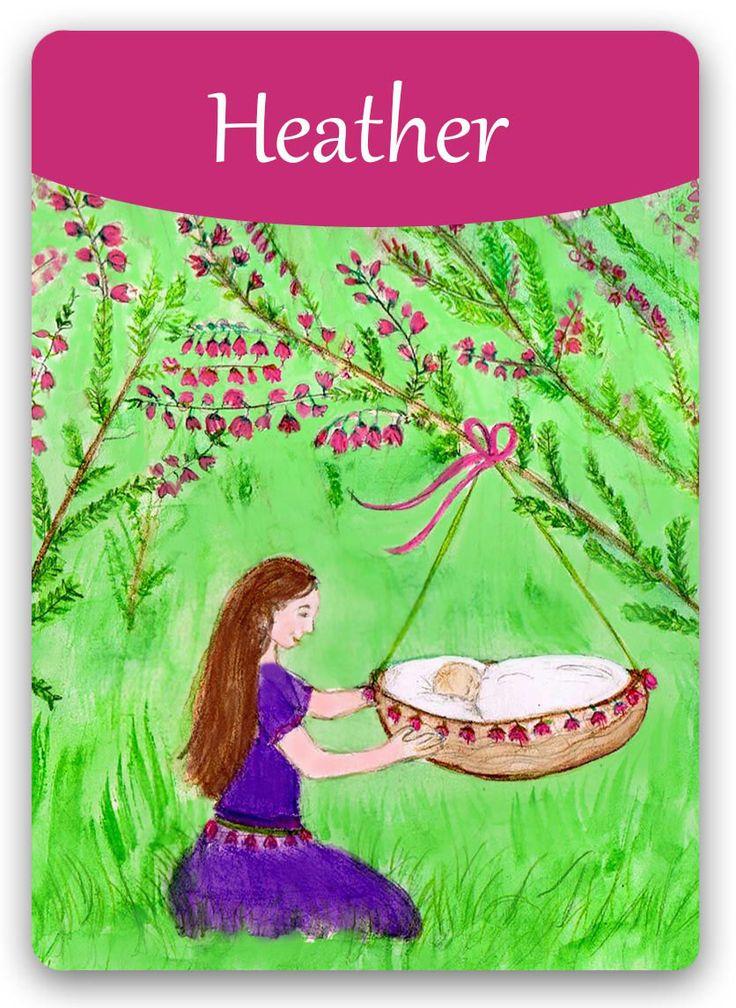 Bach Flower: Heather