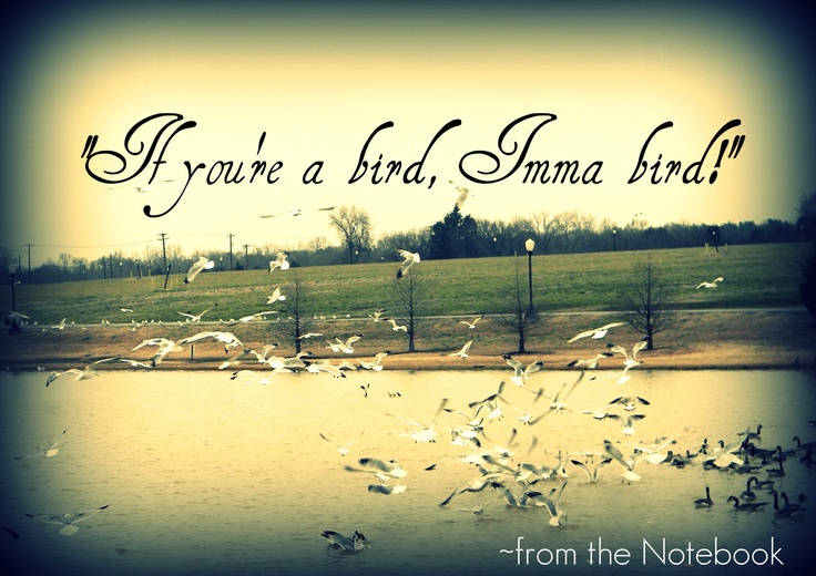 """if you're a bird, Imma bird""   ~quote from the Notebook: The Notebook, Mild Quote, Quote Obsession, Quotes Sayings"