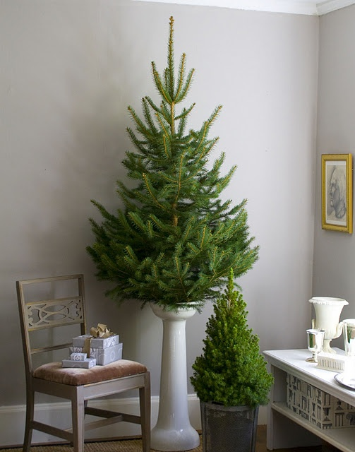 Cute for small spaces, a small tree on pedestal