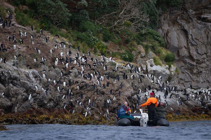 There are so many great photo opportunites along the Forgotten Islands #subantarctic ©K Ovsyanikoa