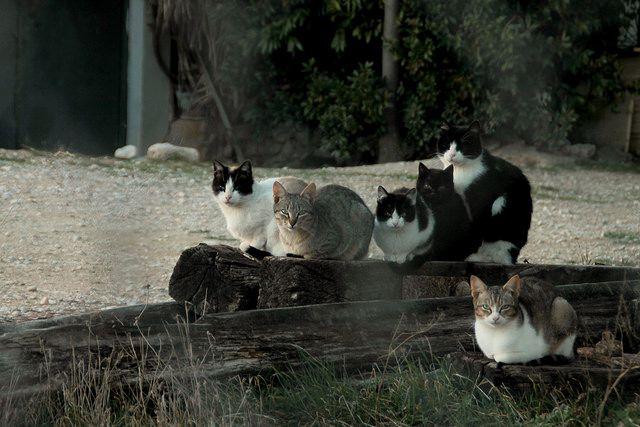 Bodegón gatuno. by sergioski1982 #Fotos #Cats #FotoGatetes