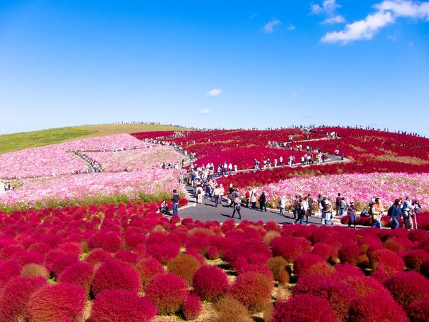 This is like Dr. Seuss...of course it's in Japan: Japanese Park Matches Flowers To Sky
