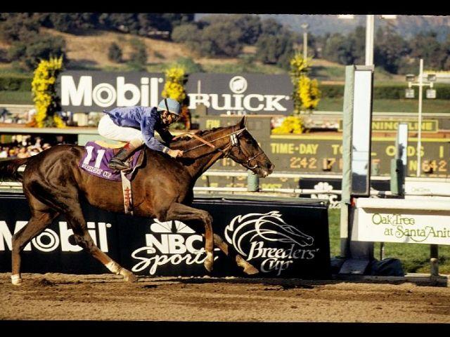 16 Best Winner S Circle Images On Pinterest Horse Racing