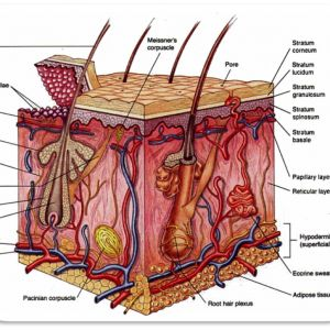What Is Anatomy And Physiology Of The Human Body ...