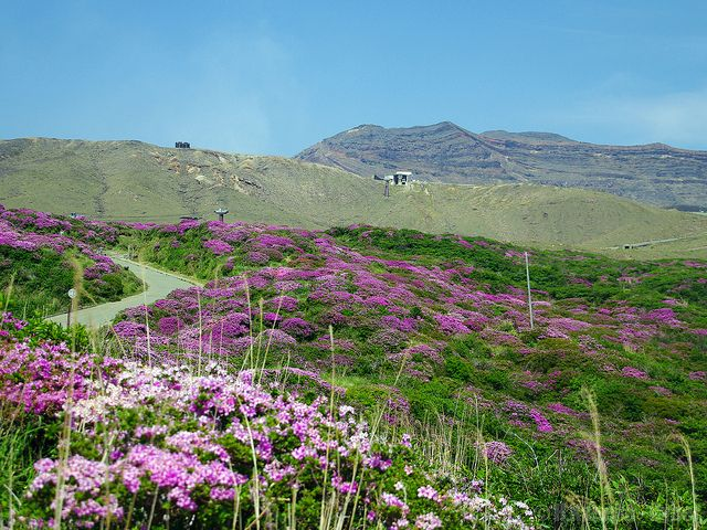 ミヤマキリシマと阿蘇山 (Mt.Aso with Kyushu Azarea)