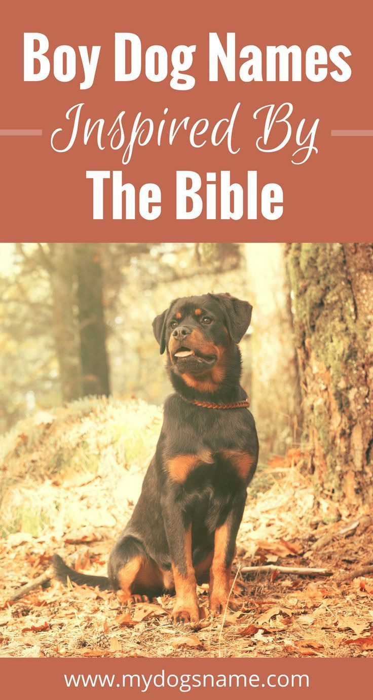 Strong, spiritual dog names inspired by the Bible  | Dog