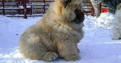 Gorgeous Fluffy Puppy Beautiful Animals Pinterest