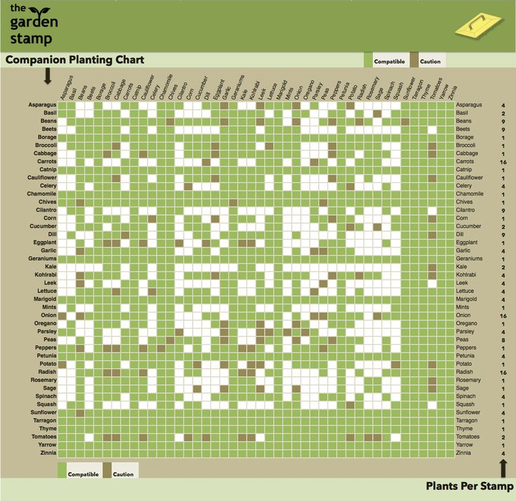 Companion plant chart the garden tool shed makes life easier pi - Companion planting ...