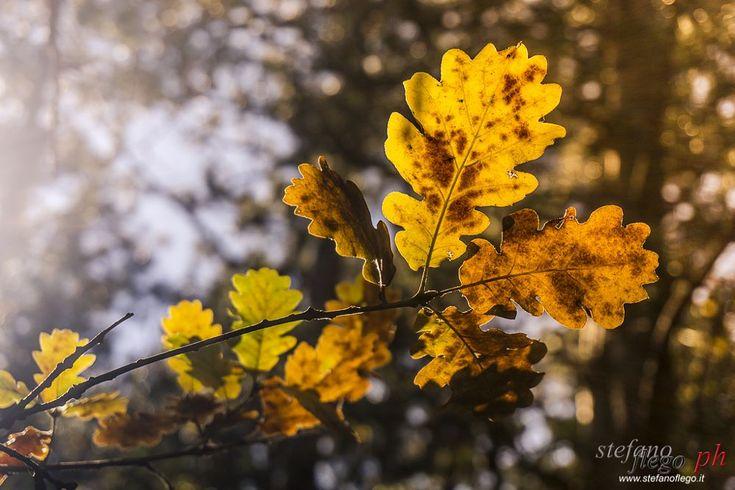 Autumn colors by Stefano Flego