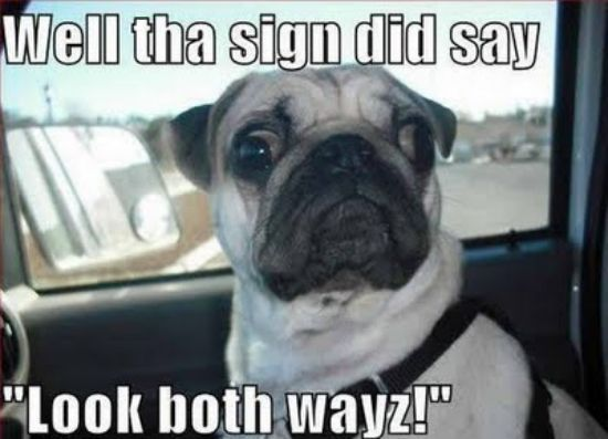 Funny Animal Pictures With Captions Bing Images Its A