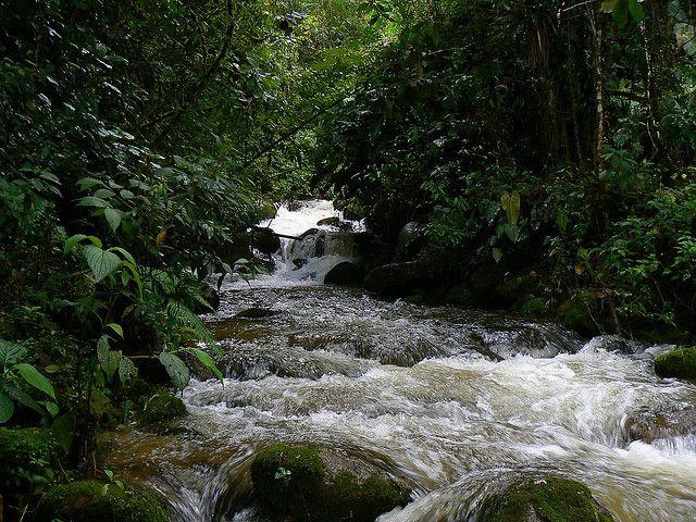 Imagen de una Quebrada en la Reserva Loro Coroniazul, Genova, Quindio.