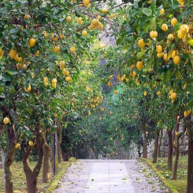 Lemon Grove Avenue: 1000+ Images About Tree Lined Driveway On Pinterest