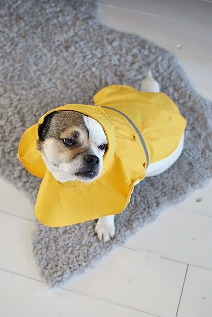 Rain Coat Dog