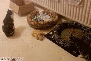 Spazzy Kitten Traps Himself Under Box | Gif Finder – Find and Share funny animated gifs